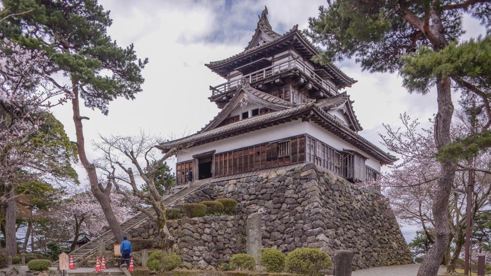 霞ヶ城公園(丸岡城)の桜