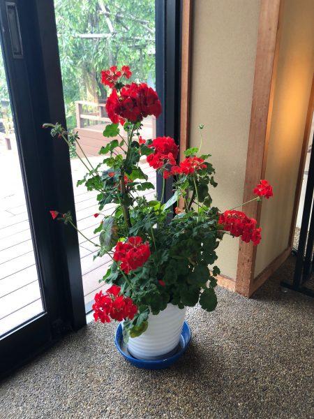 足湯前の花